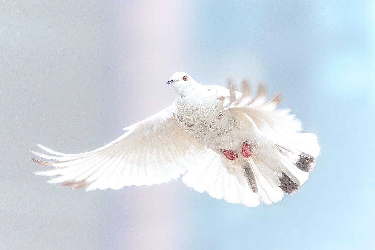 A politika hatásai a békére