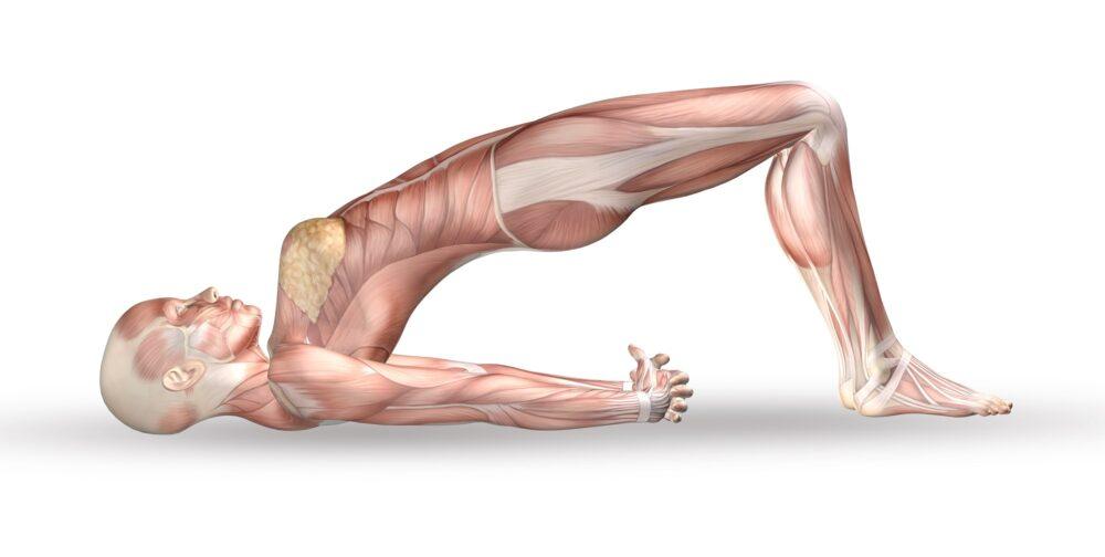 Jóga anatómia képzés